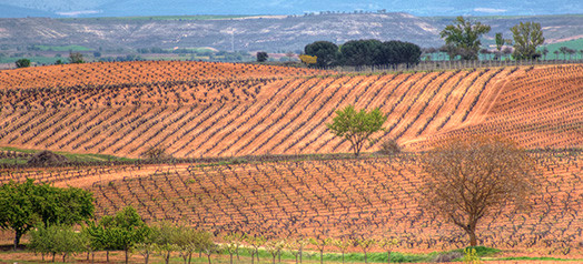 Vineyards 1a HP