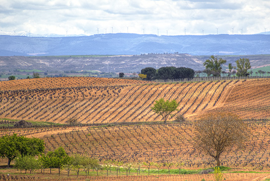 Perez Pascuas vineyards Ribera del Duero